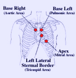 auscultation of heart