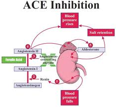 Ace Inhibitors And Arb Blockers Alone Or In Combination Appear To