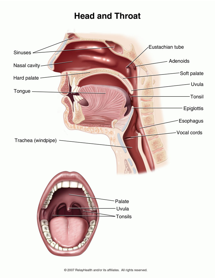sinus drainage in throat tonsils adults