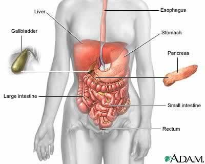 Bacterial Gastroenteritis. Causes, symptoms, treatment Bacterial ...