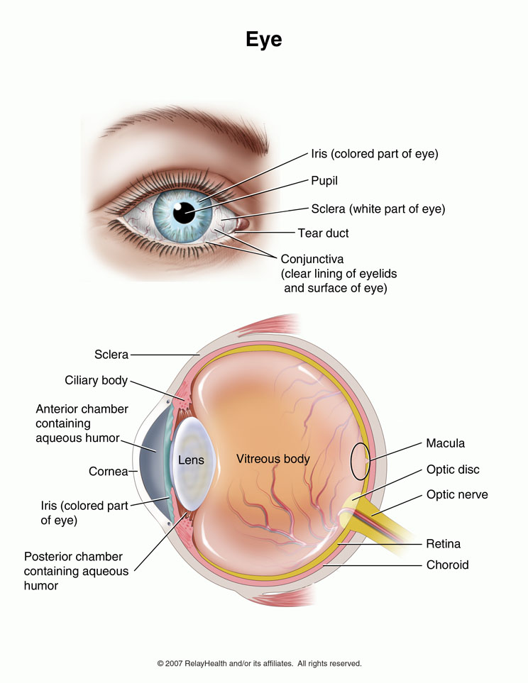 the eye of the definition National eye institute, nih, is dedicated to vision research that saves sight & reduces visual impairment & blindness.