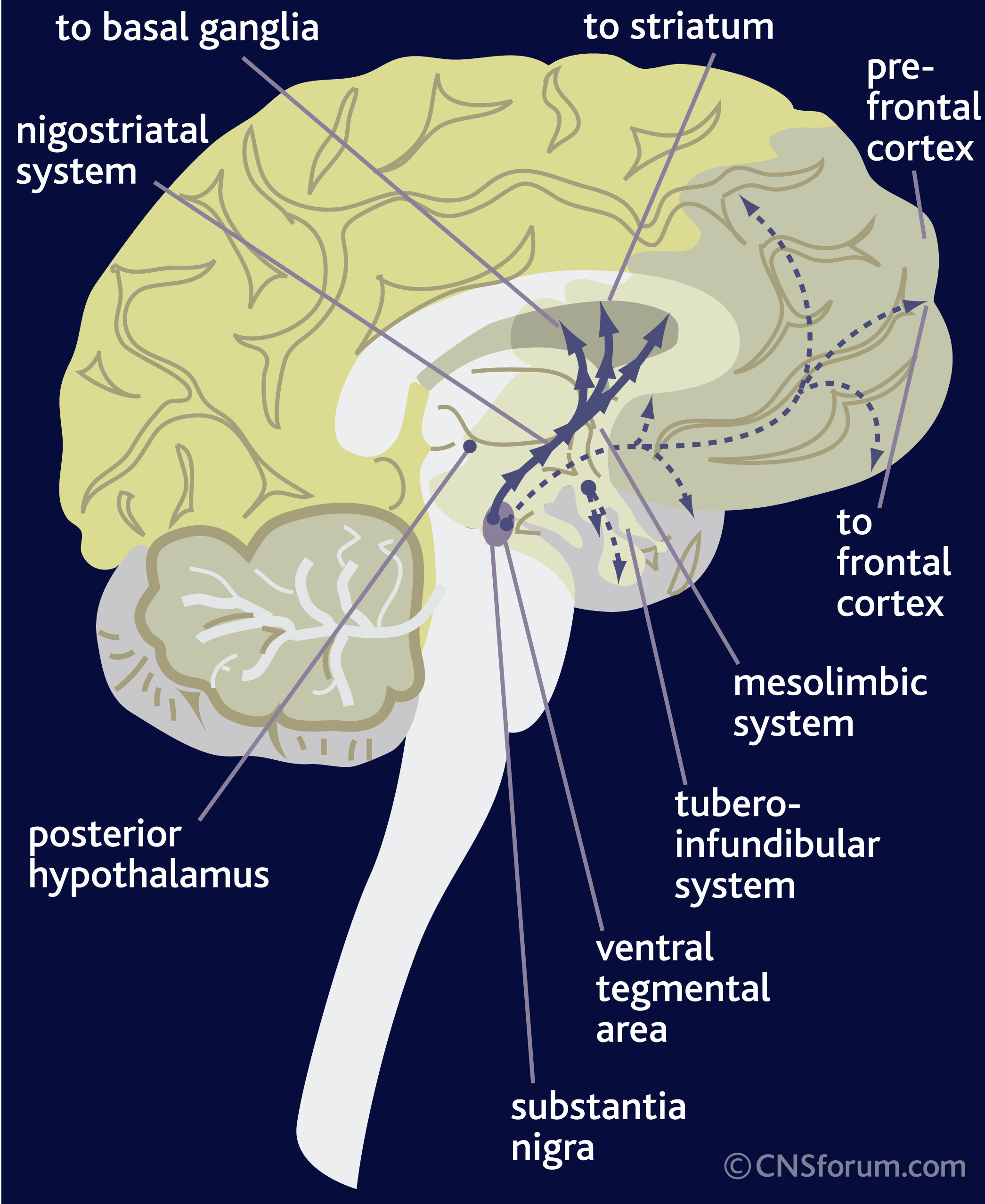 dopamine causes symptoms treatment dopamine
