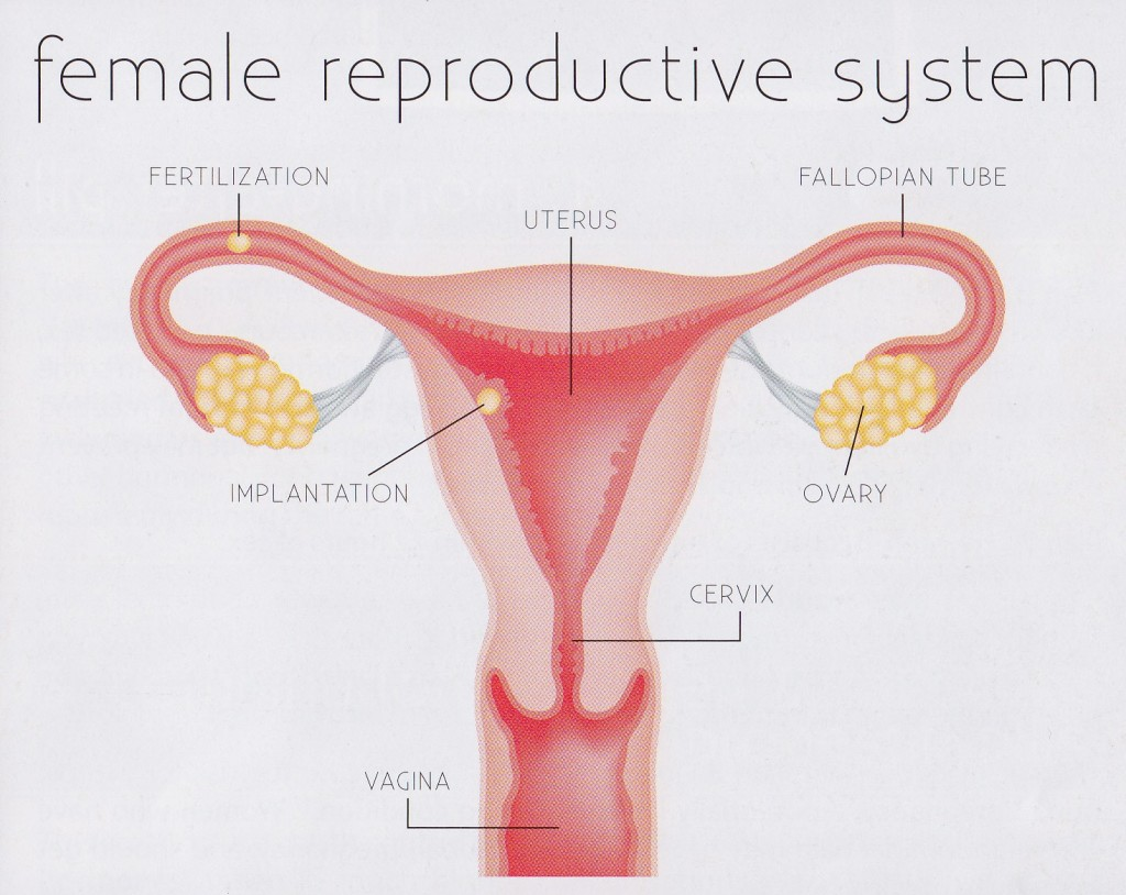 Female Reproductive System. Causes, symptoms, treatment Female ...