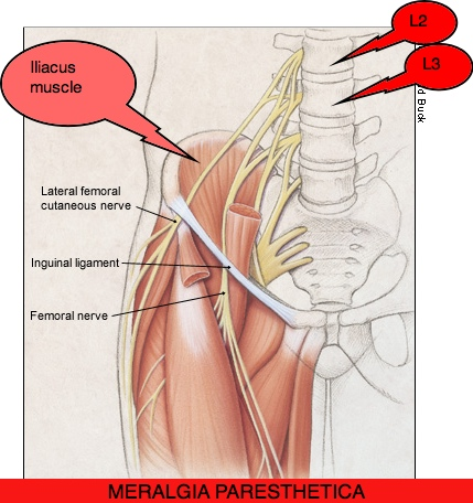 femoral nerve dysfunction. causes, symptoms, treatment femoral, Muscles