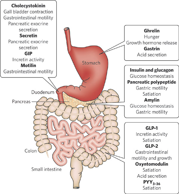 Gastrointestinal Tract - Gut. Causes, symptoms, treatment ...