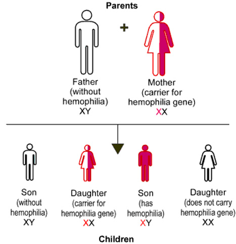 sex linked traits through meiosis and how What are sex cells how does meiosis help explain mendel's results sex-linked disorders are carried on the x chromosome a pedigree is a tool for tracing a trait through generations of a family by making a pedigree.