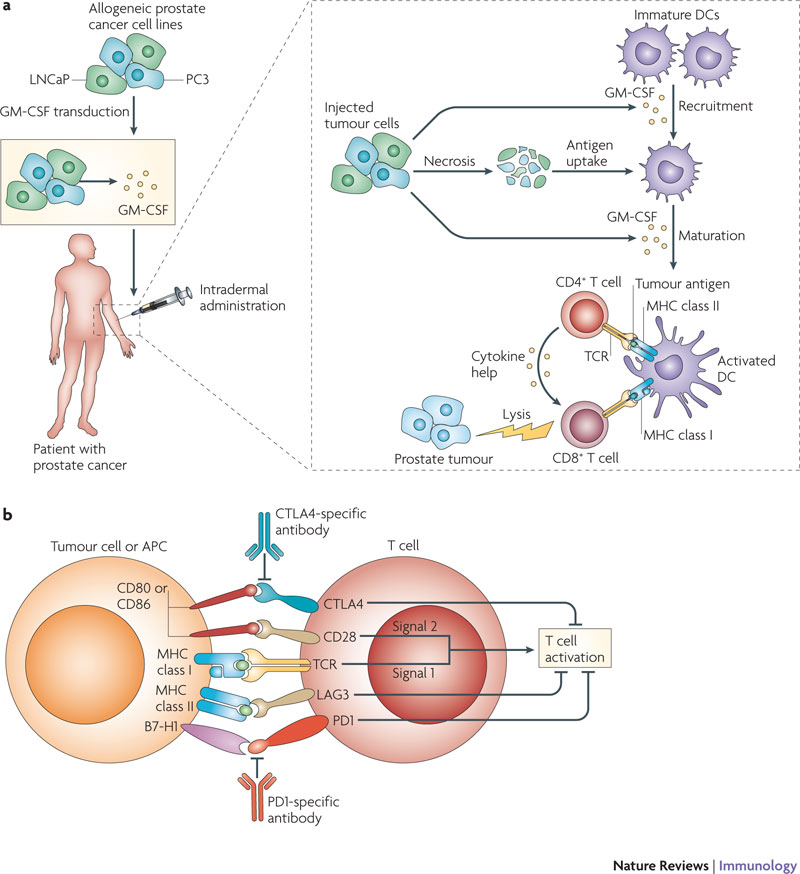 the treatment of cancer using immunotherapy Expand the use of immunotherapy to more types of cancer increase the effectiveness of immunotherapy by combining it with other types of cancer treatment.
