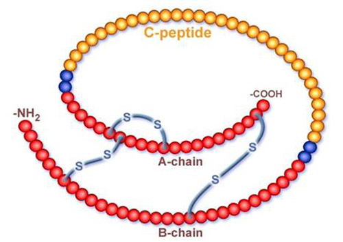C Peptide And Insulin Levels