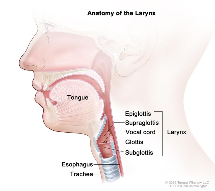 the symptoms and treatment of the larynx cancer What is throat cancer find out about the symptoms, causes, treatment options  and more get the facts from cancer council here.