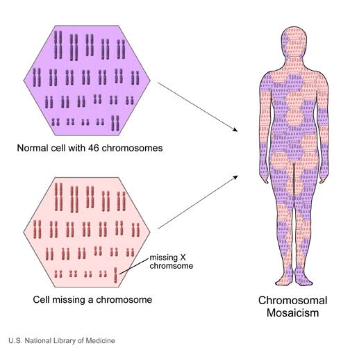 Mosaicism is a condition in which cells within the same person have a