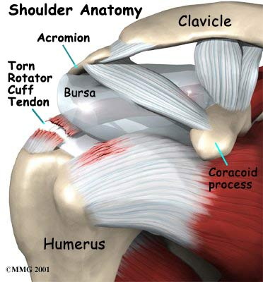 shoulder steroid injection how long to work