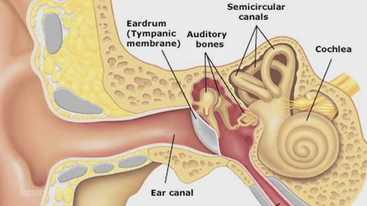 Ruptured Ear Drum. Causes, symptoms, treatment Ruptured Ear Drum