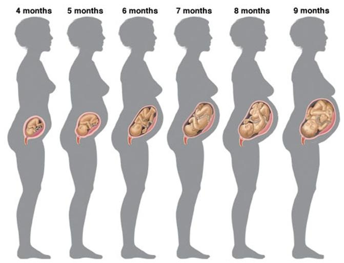 Stages of pregnancy causes symptoms treatment stages of pregnancy