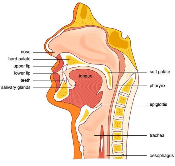 Swallowing Difficulty. Causes, Symptoms, Treatment