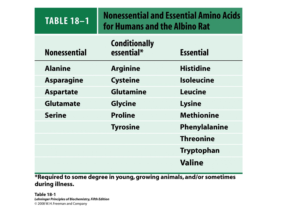 what are the essential amino acids for humans