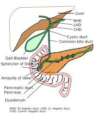 Ampulla of Vater. Causes, symptoms, treatment Ampulla of Vater