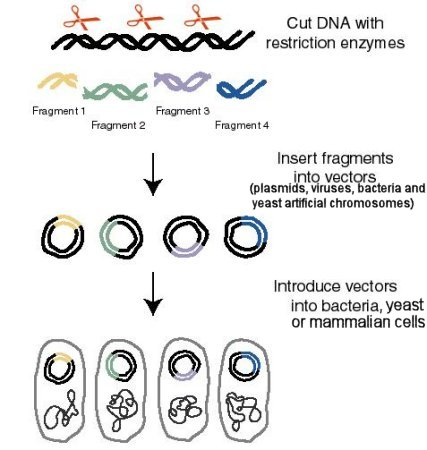 is dna cloning an issue Cloning humans no longer remains a fantasy of science-fiction authors cloning adult mammals is possible now and cloning humans is in the reach of science.
