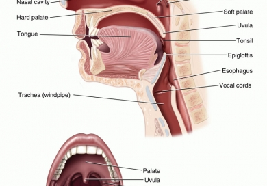 Can Tonsil and adenoid problems in adults situation familiar